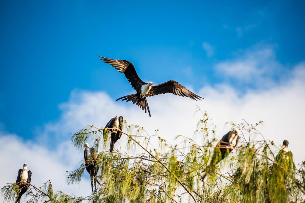 bird-island-3870 (3)