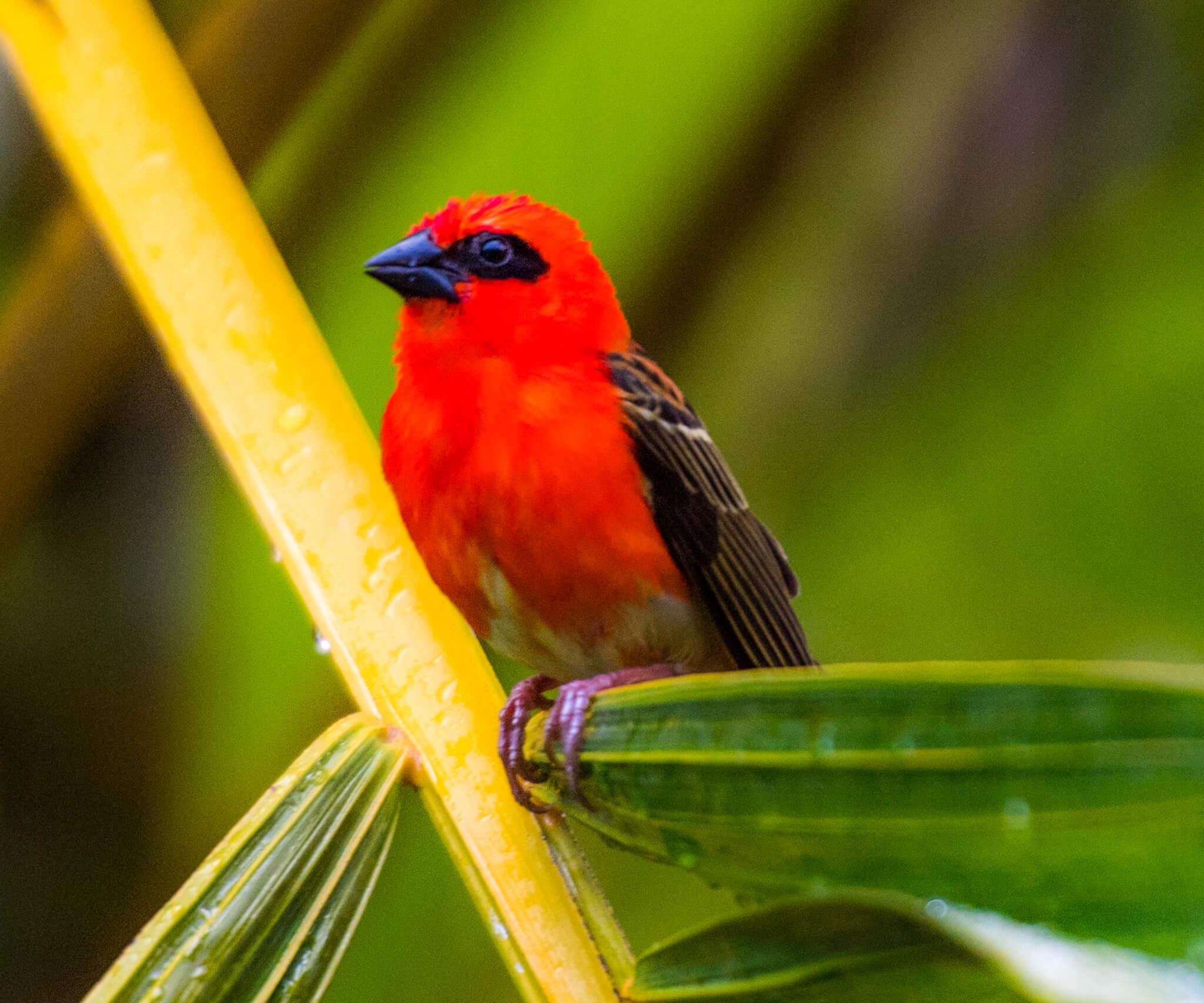 bird-island-0031